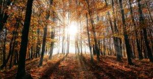 georgia_forest