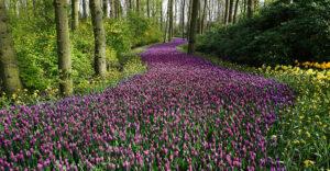 springtime_in_serenbe